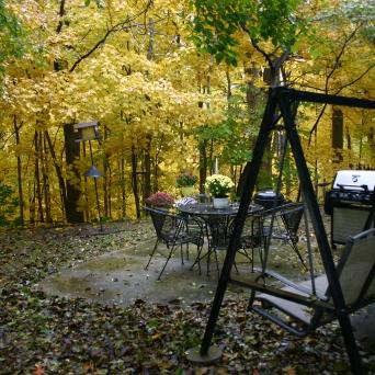 Back Yard Pin Oak
